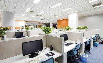 lựa chọn cây xanh cho văn phòng