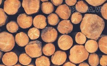 Bảo quản gỗ như thế nào