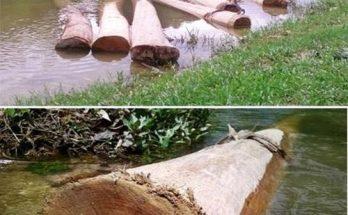 Vì sao phải ngâm gỗ xuống nước