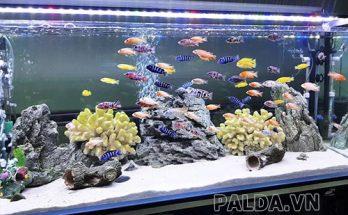 sử dụng máy sưởi cho cá để các sống tốt trong mùa đông nước lạnh