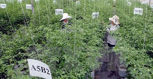 sản xuất nông nghiệp tại các khu công nghê cao tại nhiều nơi
