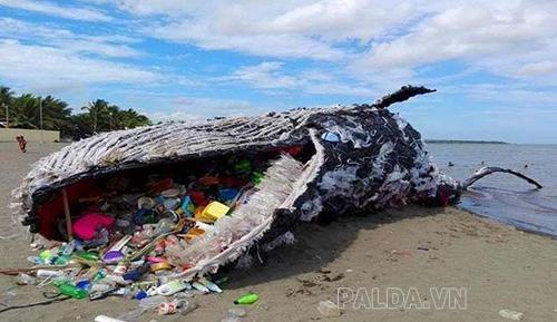 các loại động vật biển đang chết vì các loại rác thải nhựa